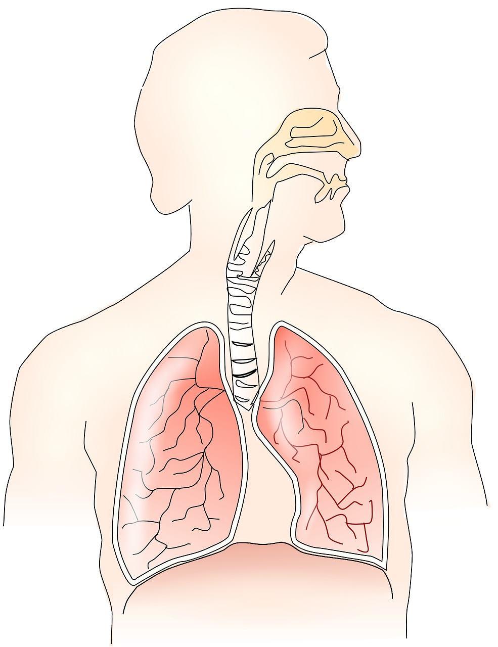 肺の解剖生理